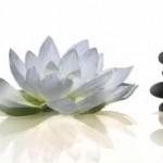 lotus avec galets