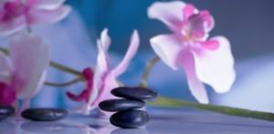 fleurs violettes et galets
